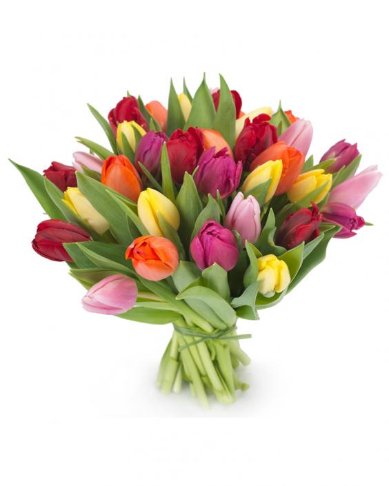 Madness Of The Tulip – Букет От Лалета