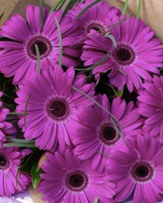 15 броя лилави гербери