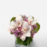 Букет Адела 5 орхидеи