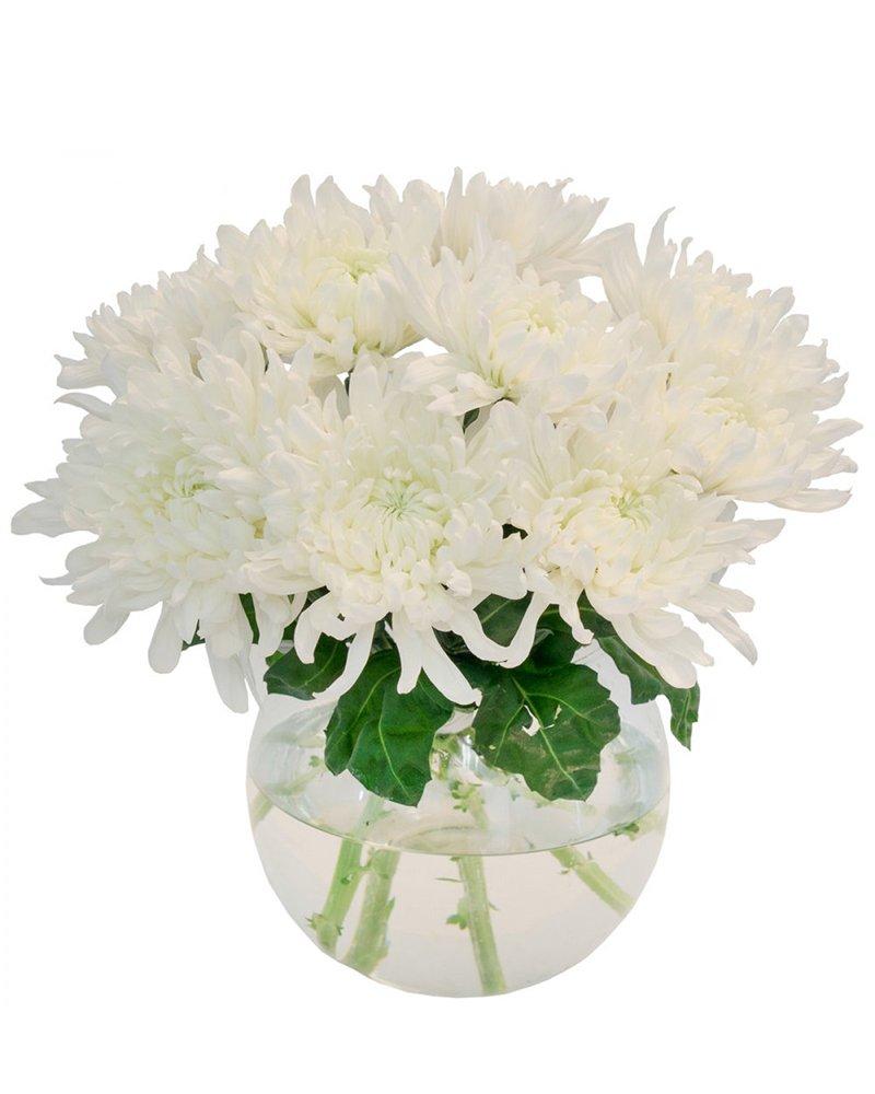 бели хризантеми