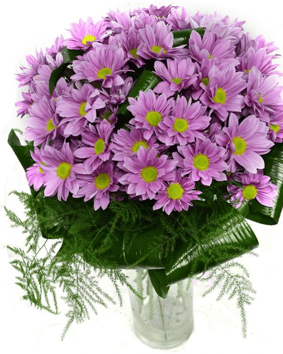 7 лилави хризантеми