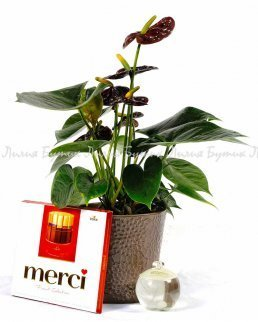 """Любовен сет """"Въздишка"""" цветя Варна"""