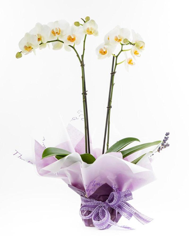 орхидея от магазин за цветя Бутик Лилия