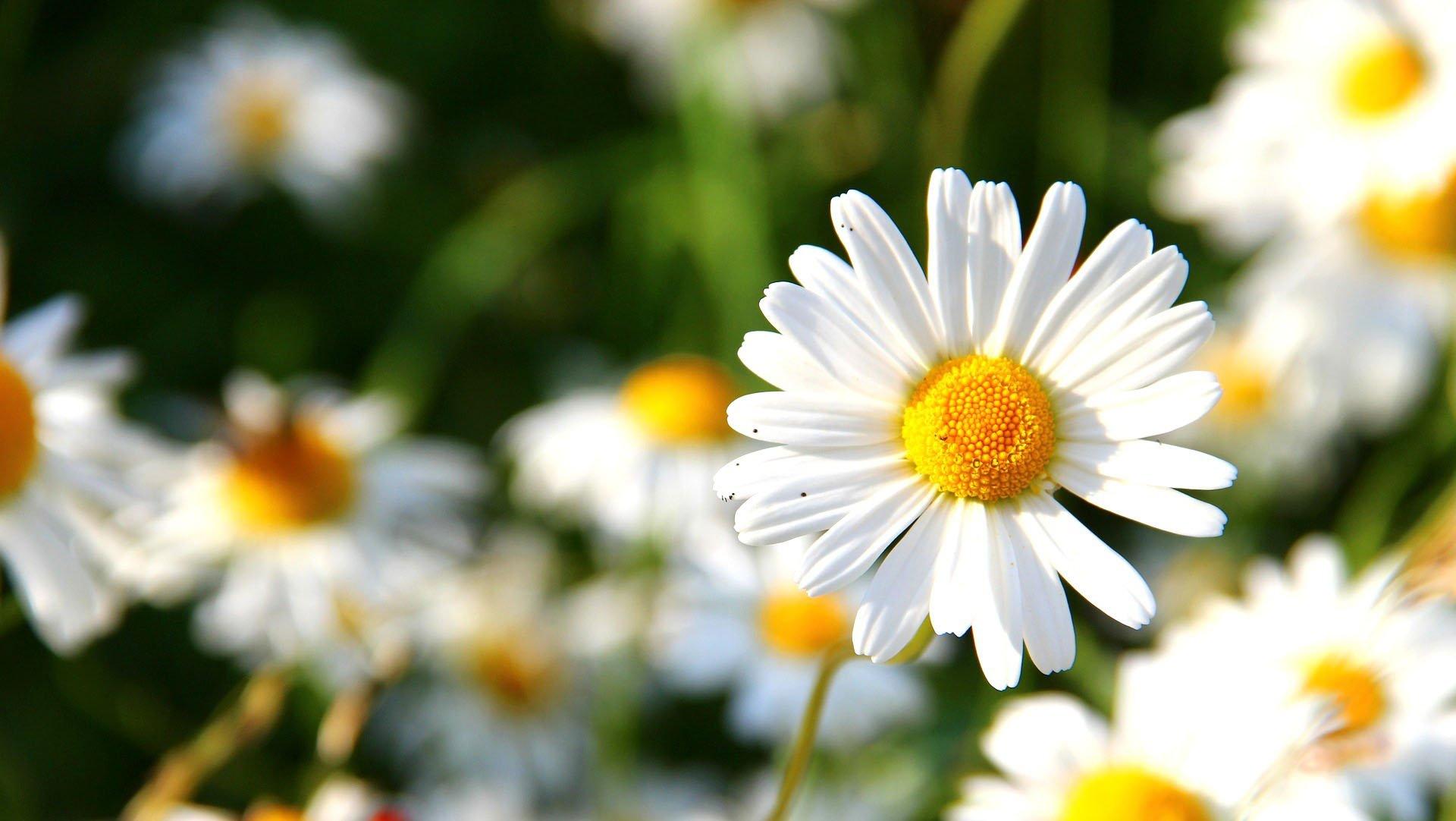 Цветя от Бутик Лилия