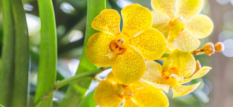 Орхидеята - мистериозната дама на цветята