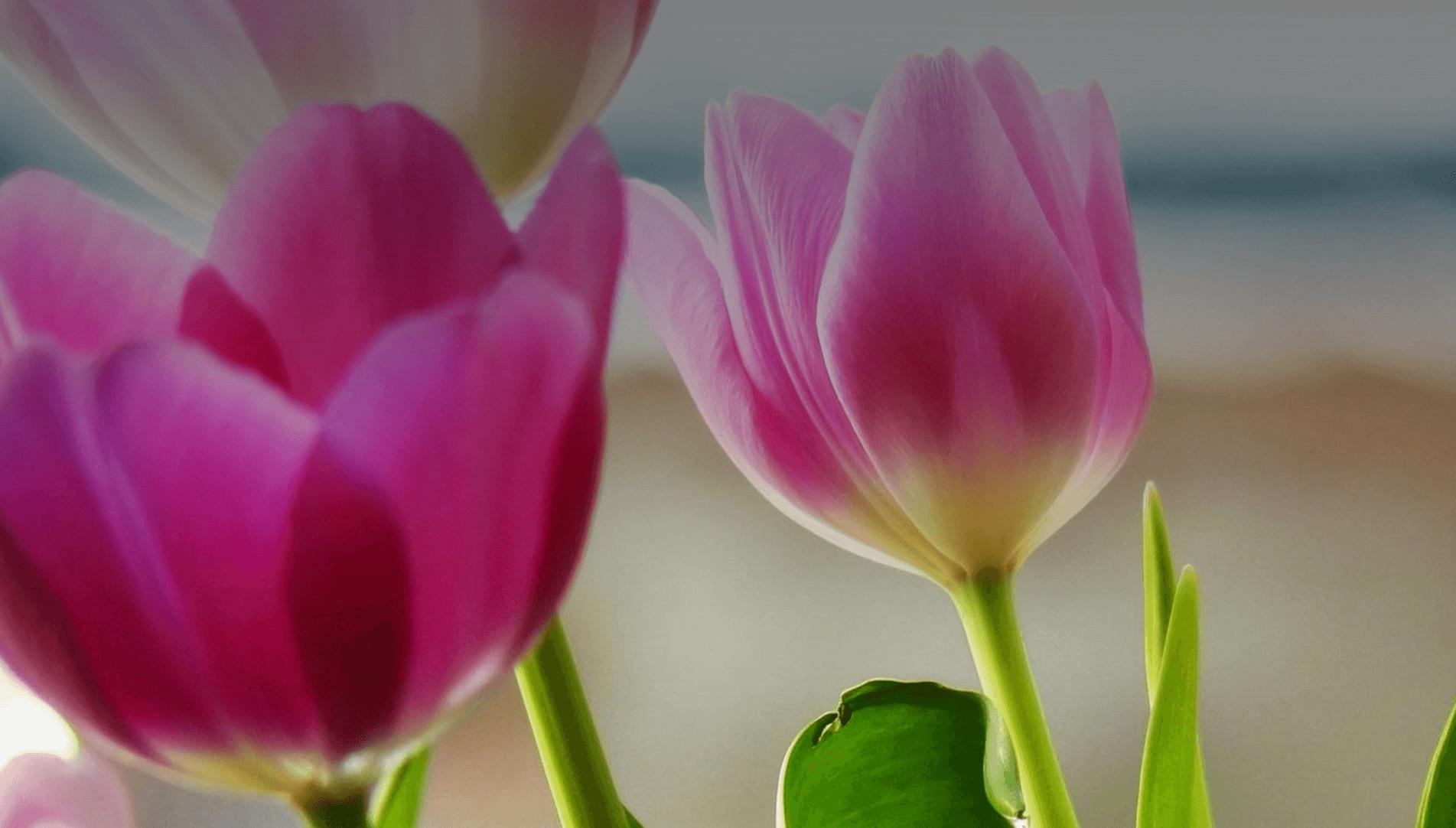 Микс букети с пролетни цветя