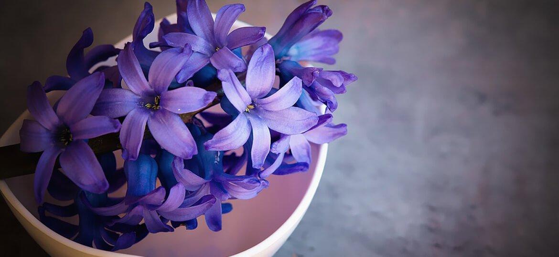 Цветето на завистта - Зюмбюли
