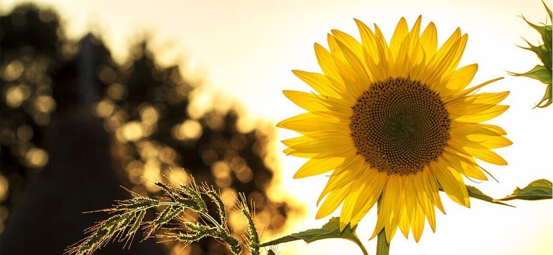 Романс със слънцето