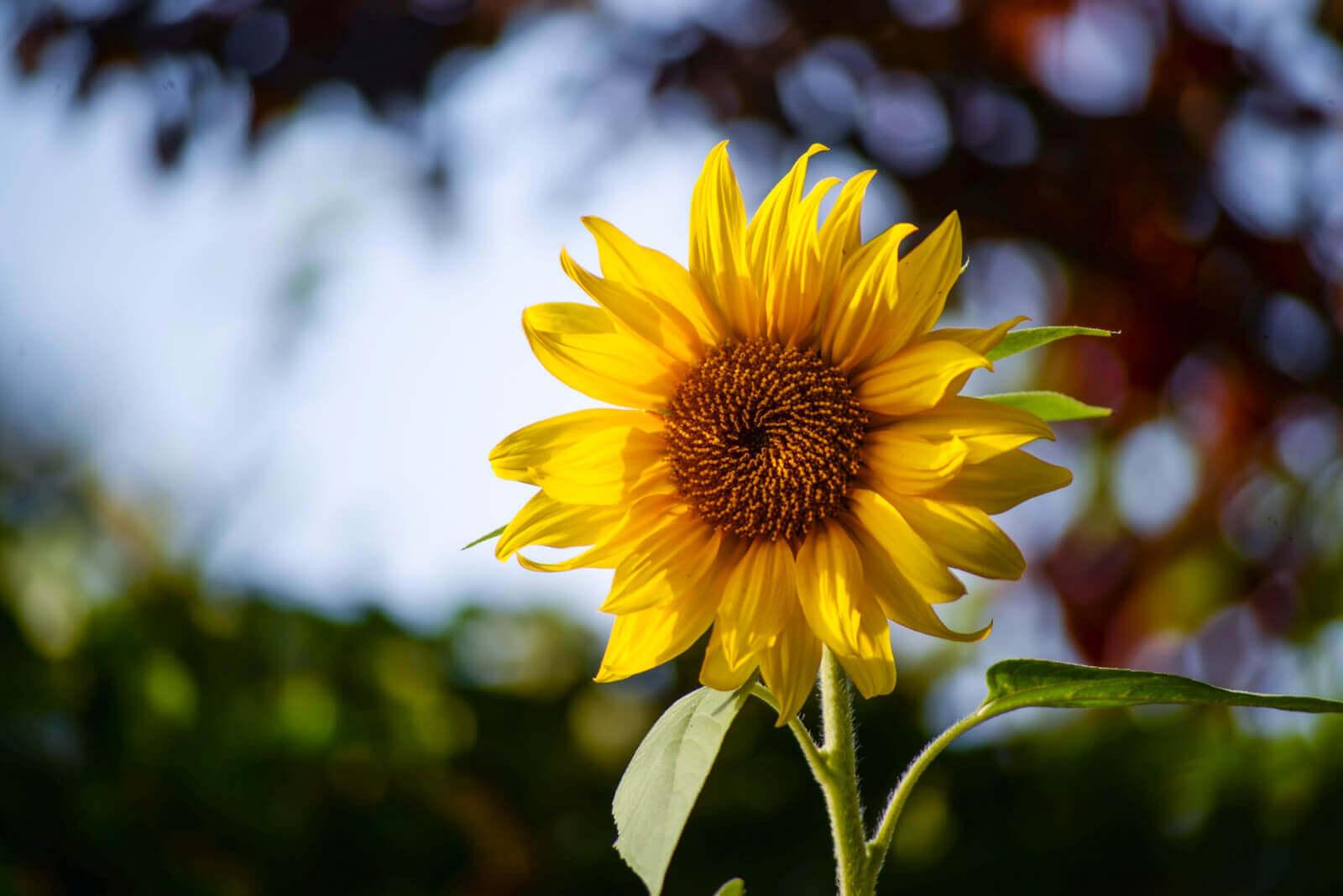 Романс със слънцето - Бутик Лилия
