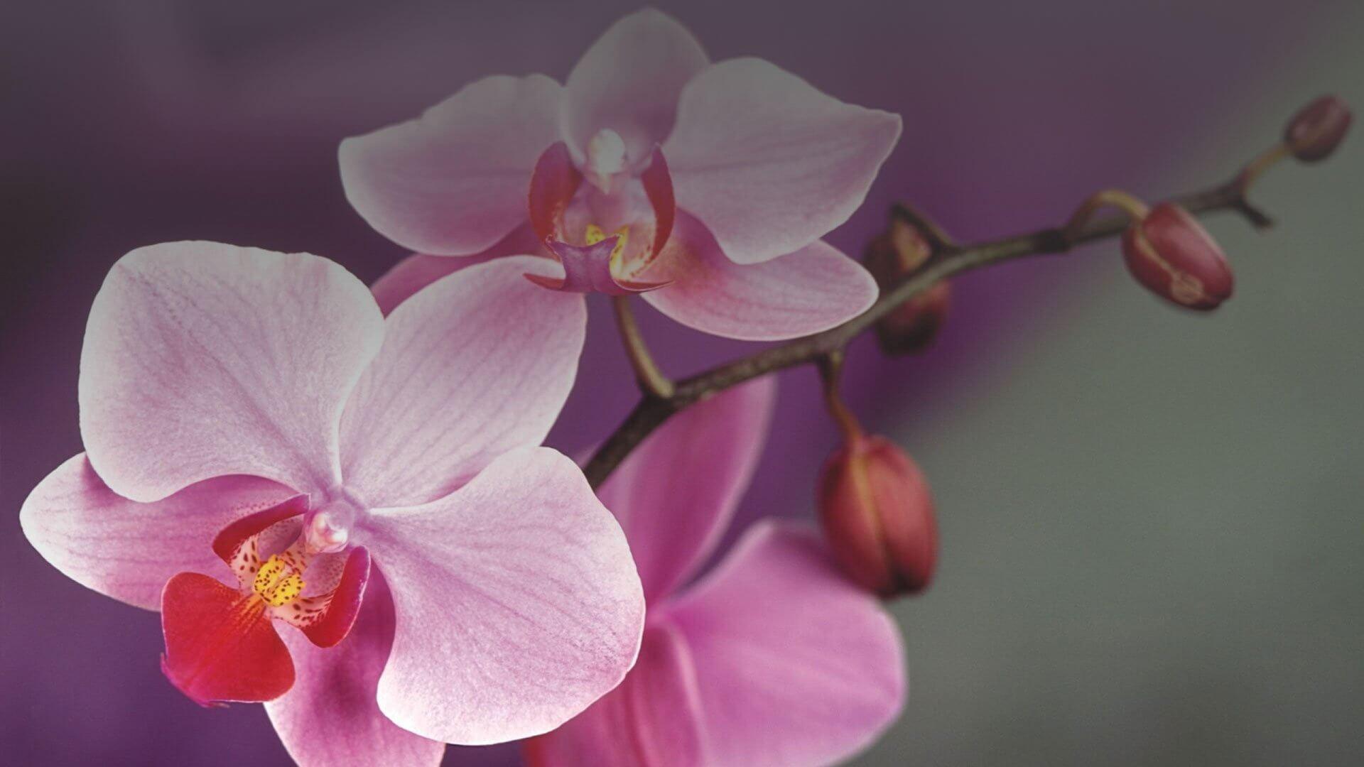 Букети от орхидеи